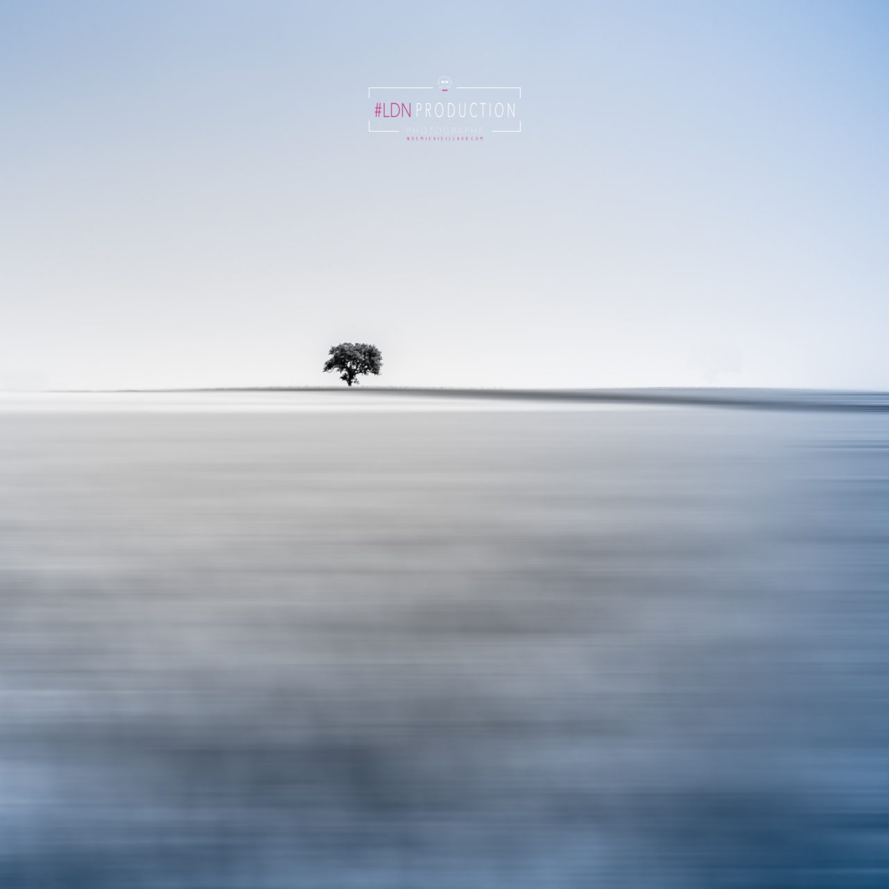 fine-art-photo-carree-arbre-seul-this-one-auvergne-noemie-vieillard-1