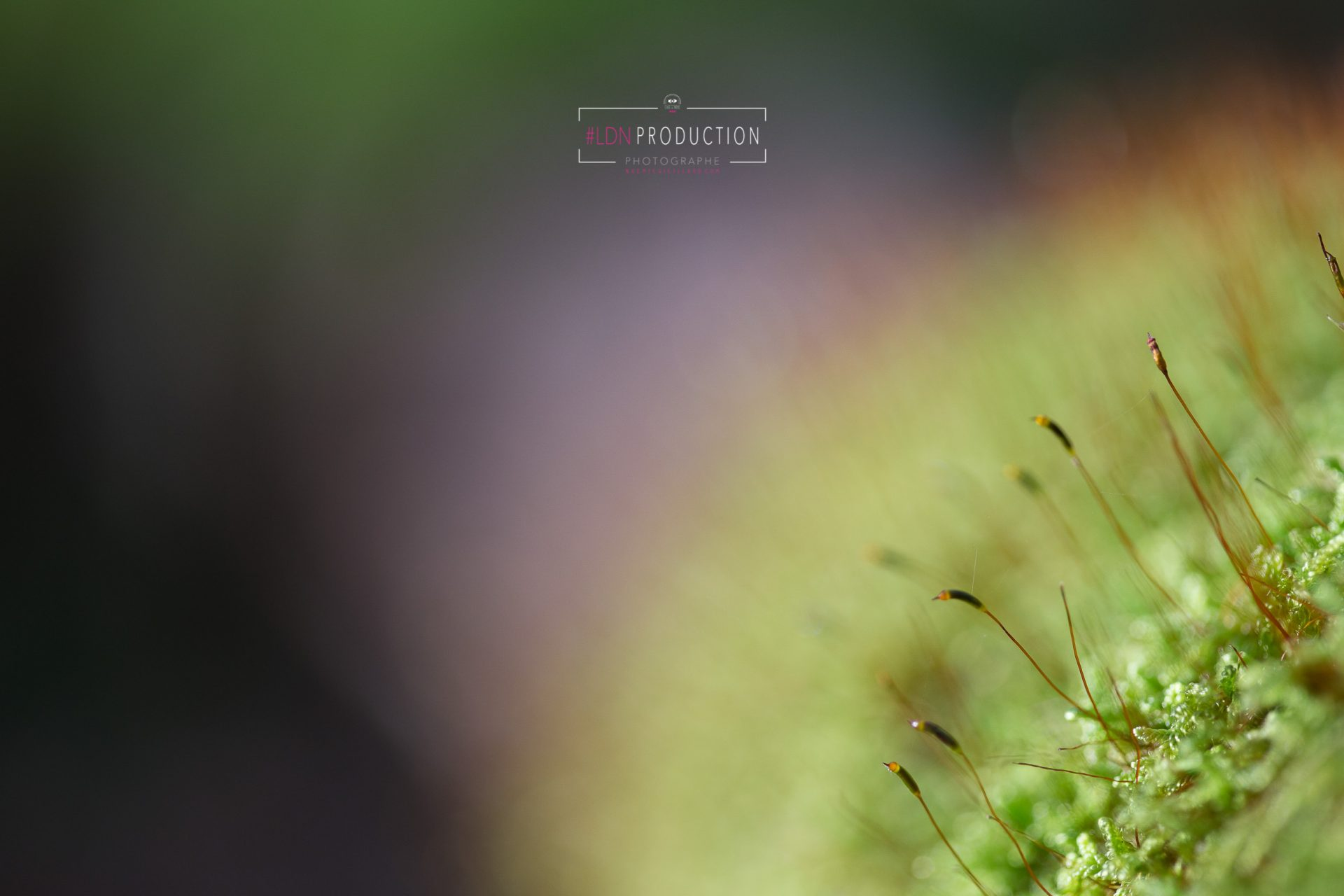 photo-nature-macro-©-noemie-vieillard-photographe-4