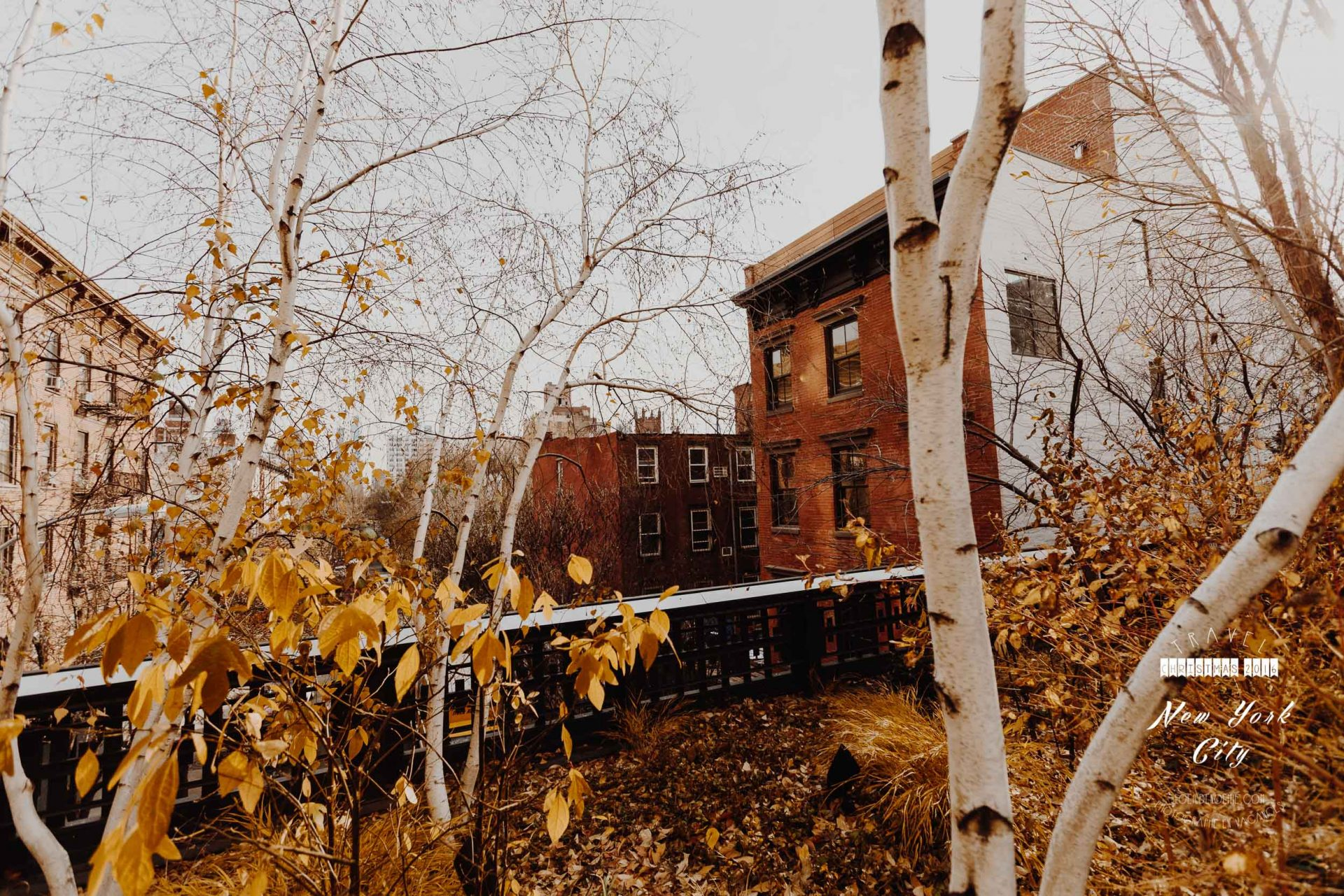 chelsea, highline nyc, manhattan, new york, by L'oeil de Noémie photographer in new york city
